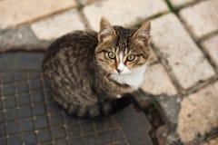 Gatinho desabrigado Foto de Stock