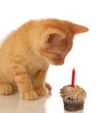 Gatinho do aniversário com queque Fotografia de Stock