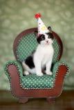 Gatinho do aniversário que senta-se em uma cadeira Fotos de Stock Royalty Free
