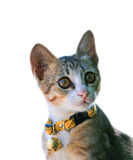 Gatinho do gato Fotografia de Stock Royalty Free