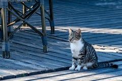 Gatinho do gato de gato malhado que senta-se no decking do pátio no verão fotos de stock