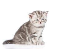 Gatinho do gato malhado que senta-se no perfil Isolado no fundo branco Foto de Stock