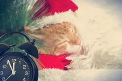 Gatinho do gengibre do Natal fotografia de stock royalty free