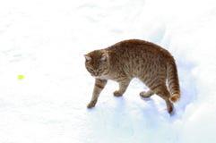 Gatinho do gengibre que anda na neve imagens de stock royalty free