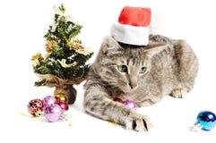 Gatinho do Natal Fotos de Stock