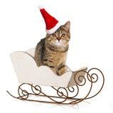 Gatinho do Natal Imagem de Stock Royalty Free
