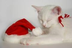 Gatinho do Natal branco Imagens de Stock Royalty Free