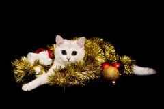 Gatinho do Natal branco Fotos de Stock