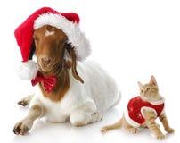 Gatinho do Natal e cabra de Santa Fotografia de Stock