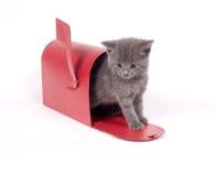Gatinho do pedido de correio Imagens de Stock Royalty Free