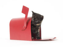 Gatinho do pedido de correio Imagem de Stock Royalty Free