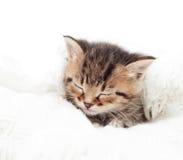 Gatinho do sono Fotos de Stock