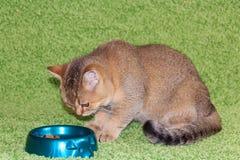 Gatinho e alimento fotografia de stock