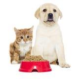 Gatinho e cachorrinho vermelhos engraçados Fotos de Stock Royalty Free