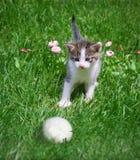 Gatinho e esfera Fotografia de Stock