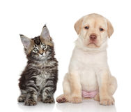 Gatinho e filhote de cachorro Fotografia de Stock