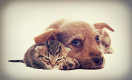 Gatinho e filhote de cachorro Fotos de Stock