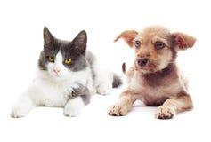 Gatinho e filhote de cachorro Imagens de Stock Royalty Free