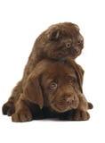 Gatinho e filhote de cachorro. Imagens de Stock Royalty Free