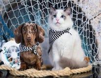 Gatinho e filhote de cachorro fotografia de stock royalty free