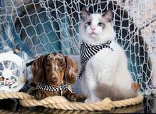 Gatinho e filhote de cachorro imagem de stock