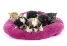 gatinho e filhotes de cachorro fotografia de stock royalty free