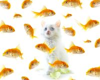 Gatinho e peixes Foto de Stock Royalty Free