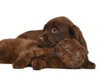 Gatinho e um filhote de cachorro junto. Imagem de Stock Royalty Free