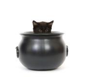 Gatinho em um caldeirão Foto de Stock