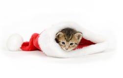 Gatinho em um chapéu de Santa Fotografia de Stock Royalty Free