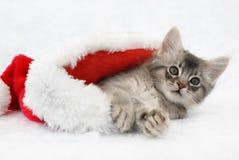 Gatinho em um chapéu de Santa Fotografia de Stock