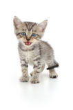 Gatinho em um fundo branco Fotografia de Stock Royalty Free