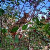 Gatinho em uma árvore Foto de Stock