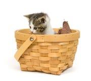 Gatinho em uma cesta no fundo branco fotografia de stock