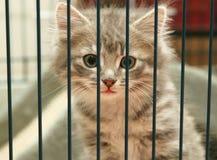 Gatinho em uma gaiola Fotografia de Stock Royalty Free