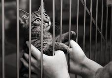 Gatinho em uma gaiola que olha acima fotos de stock