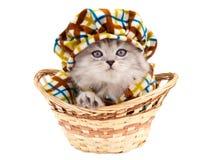 Gatinho engraçado em uma cesta Fotos de Stock