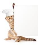 Gatinho engraçado no espaço em branco do menu da terra arrendada do chapéu do cozinheiro Imagens de Stock Royalty Free