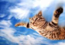 Gatinho engraçado de voo Fotografia de Stock