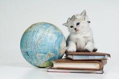 Gatinho, livros e globo Foto de Stock Royalty Free