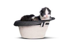 Gatinho muito pequeno em um chapéu no fundo branco puro Imagem de Stock Royalty Free