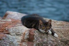 Gatinho na rocha pelo mar Imagens de Stock Royalty Free