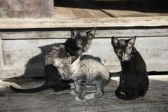 Gatinho nas etapas Nga Phe Kyaung ou moastery de salto dos gatos, Inl Imagens de Stock