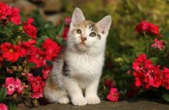Gatinho nas flores Imagens de Stock Royalty Free
