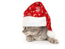 Gatinho no chapéu do Natal. Fotografia de Stock