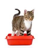 Gatinho no gato plástico vermelho da maca No fundo branco imagens de stock
