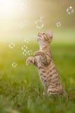 Gatinho novo que joga com bolhas de sabão, bolhas no prado Imagens de Stock