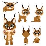 Gatinho ou lince marrom dos desenhos animados em poses diferentes Imagem de Stock Royalty Free
