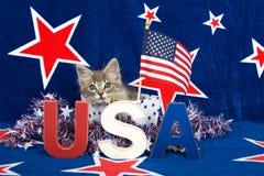 Gatinho patriótico do gato malhado Fotografia de Stock