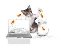 Gatinho Pawing em saltar dos peixes do ouro da água fotos de stock royalty free